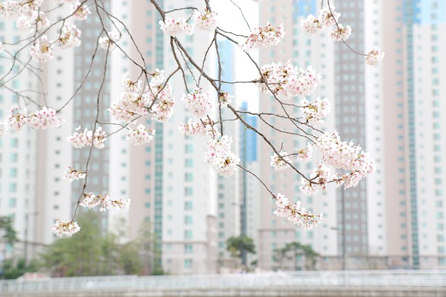 Photo: Spring Flowers in front of an apartment building